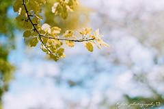 ( ()) Tags: pentax m42 spf  film  filmphotography supertakumar55mmf18 takumar 55mm f18 55 18 bokeh rossmann 200 rossmann200