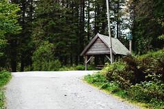Bergen, Norway. (sullen_snowflakes) Tags: bosco wood natura nature alberi trees sentiero bergen norvegia norway canon
