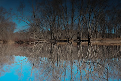 playground (spanaut) Tags: flipped concord massachusetts unitedstates us marsh pond trees fall water sky structure lines nature upsidedown symetry