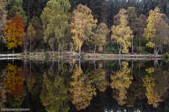 Autumn Tones I (RobGrahamPhotography) Tags: autumn fall glencoe glencoelochan lochan reflections calm morning still landscape landscapes outdoor canon canon6d britain scotland highlands