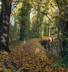 lawe (xtrice) Tags: lalawe fouquièrelesbéthune sousbois automne pasdecalais ubuntu rawtherapee hugin gimp