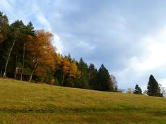 SCHWARZWALD IM HERBST (ehbub@yahoo.de) Tags: schwarzwald tannenbaum laubbaum wiese herbst
