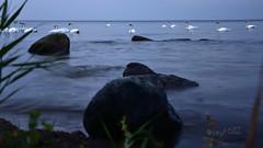 Schwanen-Nacht vor Rgen. (seyf\ART) Tags: rgen landschaft landscape kste coast mecklenburg ostsee balticsea