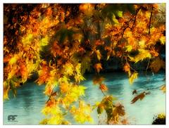The end of autumn (bertalberto52) Tags: allacacciadellombradelgrandemuro sanmaurotorinese torino italy cplfilter polarizer polariser polarizing piedmont piemonte italia parcodelmeisino landscape panorama ilfiumepo
