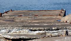 Penetrating Rust _6182 (hkoons) Tags: atlantic bakkaförður iceland wharf abandon abandoned bay beach concrete cracks disused fiord fjord inlet island left northeast ocean old rust saltwater sand sea surf water waves