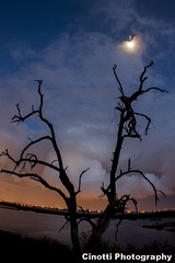 BOLSA CHICA WETLANDS #129-35D (bonn_conv) Tags: landscape sunset bolsa chica wetlands trees ocean pch moon