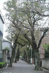tokyo6105 (tanayan) Tags: urban town cityscape tokyo japan nikon j1   road street alley akabane