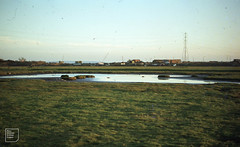 North West snipe pool near River Lamby Flats. 8th November 1978 (Mary Gillham Archive Project) Tags: 08111978 lamby landscape st2178 wales water 1978 8129 cardiff