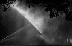 Making it Rain (maytag97) Tags: maytag97 oregon tamron 150 600 150600 sprinkler water bw silhouette spray stream park outdoor outside blackbackground