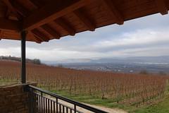 Johannisberger Türmchen - Blick auf Ockenheim und nach Bingen