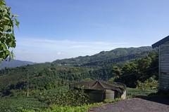 DSC03014 (Alan A. Lew) Tags: ruili taiwan alishan 2015