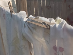 P8292926.jpg (mcreedonmcvean) Tags: clotheslines ourbackyard lastlight aroundthehouse 20150831