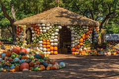 _MG_0312 (Explore) (918monty) Tags: autumn fall gourds festival chuckwagon dallas texas pumpkins straw squash western botanicalgardens