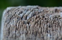 hidden dragon - common lizard (Zootoca vivipara) hiding in a fencepost (willjatkins) Tags: macro lizard lizards britishwildlife reptiles londonwetlandcentre commonlizard sigma105mm londonwildlife hiddenanimals ukwildlife uklizard zootocavivipara zootoca hiddenwildlife barnelms britishreptiles londonreptiles macrowildlife britishlizards britishreptilesandamphibians uklizards reptilesofeurope ukreptiles nikond7100 ukamphibiansandreptiles ukreptilesandamphibians britishamphibiansandreptiles wildlifeoflondonwetlandcentre londonlizards crypticwildlife