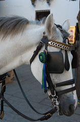 Ribbon (F!l!pe) Tags: horse ribbon