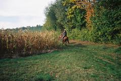 Husch ... und weg :-) (alf sigaro) Tags: reiter disposablecamera agfa pferd badenwürttemberg disposablecameras singleusecamera agfaphoto einwegkamera lebox zentrumsschärfling agfaphotoleboxoutdoor agfaphotolebox