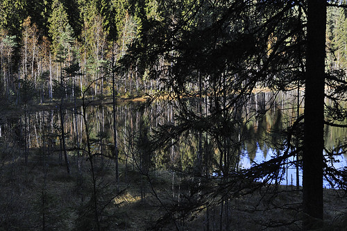 High conservation value forest planned to be clearcut by Finnish UPM