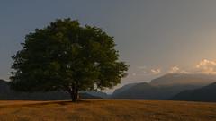 Loneliness 01 (Ilkin Kangarli) Tags: mountains forest azerbaijan caucasus лес горы guba кавказ куба азербайджан губа