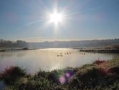 Burnaby Lake (tom_2014) Tags: winter sky lake canada bird water birds vancouver america landscape dawn frost bc view outdoor walk britishcolumbia scenic ducks peaceful canadian shore burnaby northamerica waterfowl wetland burnabylake
