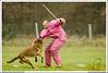 First Von King Von Backdraft RINALDI V  -0862 (Fab Photos Canine et Sportive) Tags: king von first backdraft