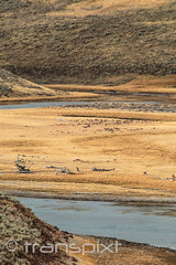 Sagebrush carpet for the windering banks of the Madison River (transpixt) Tags: nanparegionalevent grandtetons montana nationalpark wyoming yellowstone yellowstonenationalpark usa us