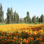 Chinampa florida