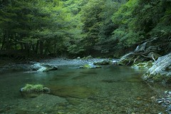 mountain stream #1 (Y.Hassy) Tags: mountainstream forest green 5d canon tree kyoto water