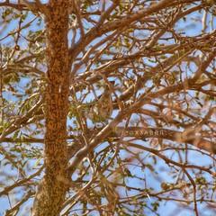 #goodevening  #_  # #birds #bird #instabird #  # # #instabirds #insyaanimals #instaanimal #animal #animals #hdr #sonyalpha  #saudiarabia  # # # #sonya (photography AbdullahAlSaeed) Tags:  goodevening birds saudiarabia instaanimal instabirds  instabird bird sonyalpha sonya animals animal    hdr insyaanimals