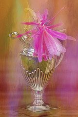 Two beauties (BirgittaSjostedt) Tags: flower pot texture paint art card flowercard stilllife beauty birgittasjostedt ie