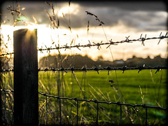 Sunlit fence (CWhatPhotos) Tags: omd em5 photographs photograph pics pictures pic picture image images foto fotos photography artistic cwhatphotos that have which with contain esystem four thirds digital camera lens taken mk ii mk2 olympus countryside walk sacriston nature colors colours outside fresh novembers day november 2016 autumn silhouette silhouettes silhouetted shadows light sun sunlight evening late clouds cloudy weather sky skies barbed wire fence county durham north east england