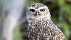 What are you doing there? (michel1276) Tags: tier animal vogel kauz prriekauz earthnaturelife