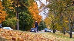 2016 Bike 180: Day 244, October 10 (olmofin) Tags: 2016bike180 finland bicycle cyclist commuter fall autumn colors polkupyr pyrilij pyrtie ruska sysy syksyn vrit mzuiko 45mm f18
