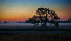 Misty Morning Thoroughfare (Knarr Gallery) Tags: sunrise dawn morning mist highway tree sillouette 401 westlorne ontario nikon colors d300 18200mmf3556gvrii
