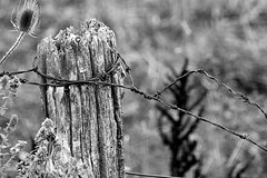 Fence Post (Brad_McKay) Tags: ifttt 500px fence post wood old wire barbed plants black white