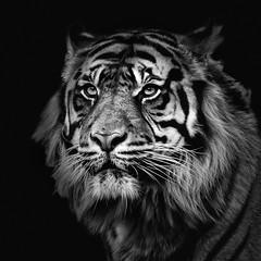 Sumatran Tiger (adrian.sadlier) Tags: cat bigcat sumatran sumatrantiger tiger wild powerful impressive