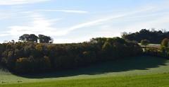 Ayrshire, Scotland. Wooded Ridge. (Phineas Redux) Tags: ayrshirescotland ayrshire scotland scottishlandscape