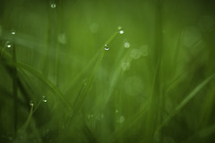 Drop To The Future. (Grf: f the pp) Tags: droplets grass bokeh beyondbokeh dof