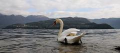 lago di Iseo (Roberto Gramignoli) Tags: lagodiiseo paesaggio paesaggi landscape lake veduta