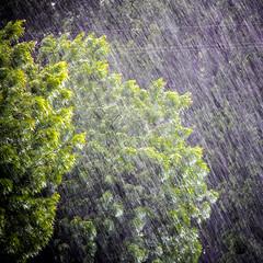 2016-like a painting-1-7729 (Donna Longobardi) Tags: likeapainting rain