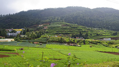 Terrace Farms (code_martial) Tags: ooty2016 ootacamund udhagamandalam d3300 1685mmf3556gvr shotbynazia