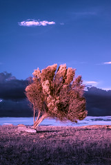 The Tree (Athrandel) Tags: land landscape landscapes nature green tree trees sky skies cloud clouds infra infrared ir colour colours colors colorful dramatic mood field fields