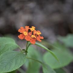 Blurry! (dakdad) Tags: flower graden outdoor srilanka