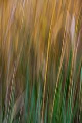 Gras in Bewegung 3 (Hiheinz) Tags: grser effekt bewegung dynamik regionen natur movement