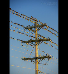 Birds on a Wire (J.L. Ramsaur Photography (Thank You for 4 million ) Tags: jlrphotography nikond7200 nikon d7200 photography photo cookevilletn middletennessee putnamcounty tennessee 2016 engineerswithcameras cumberlandplateau photographyforgod thesouth southernphotography screamofthephotographer ibeauty jlramsaurphotography photograph pic cookevegas cookeville tennesseephotographer cookevilletennessee bluesky deepbluesky beautifulsky birds bird birdsonawire telephonepole powerlines nature outdoors godsartwork naturespaintbrush rural ruralamerica ruraltennessee ruralview