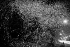 See Cthulhu if you want to see (salahudin's paragnomen) Tags: kraków krakoff poland polska trees tree branch light dark gloom darkness street urban nature danger fear vision strange night longexposure uncounciousness tunnel path lantern web canon nocturnal bw 123bw monochrome