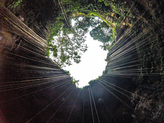Looking up at Cenote Ik Kil
