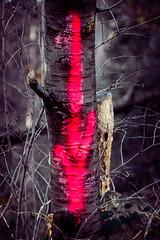 nach unten (Sascha Wolf) Tags: macro mondays arrows pfeil rot stamm farbe