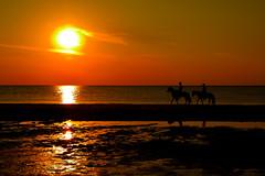 Zonsondergang de Koog (l-vandervegt) Tags: sunset horses orange holland color colour netherlands waddeneiland zonsondergang nikon nederland paysbas texel oranje niederlande paarden 2015 dekoog paísesbajos belanda paesibassi d3200 niderlandy