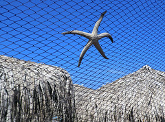 (Malo bi te Tako) Tags: sea beach starfish greece sithonia plaa grka morskazvezda sitonija