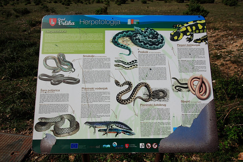 Herpetofauna of Croatia